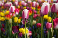 Beautiful flower garden with colorful blooming flowers Stock Image