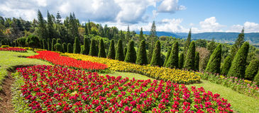 Beautiful Flower garden colorful royalty free stock photos