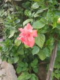 Flower in my garden royalty free stock photos