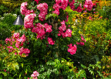 Beautiful flower garden in HDR Stock Photo