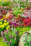 Beautiful flower garden. Stock Photography
