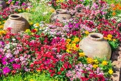 Beautiful flower garden. Stock Image