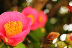 Beautiful flower in the garden Royalty Free Stock Image