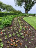 Rows of newly planted flowers in flower garden stock photography