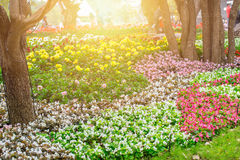 Beautiful flower garden park outdoor stock image