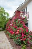 A beautiful flower garden of roses Stock Photos