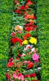 Beautiful flower garden in Schonbrunn palace - Vienna Austria Stock Photography