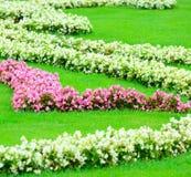 Beautiful flower garden in Schonbrunn palace - Vienna Austria Royalty Free Stock Photo