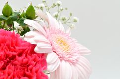 Beautiful flower. (Gerbera) Royalty Free Stock Photos