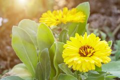 Beautiful flower and green leaf background in garden at sunny summer or spring day. Stock Images