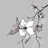 Beautiful flower. Hand drawn  illustration Royalty Free Stock Photos
