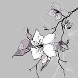 Beautiful flower. Hand drawn  illustration Royalty Free Stock Photos