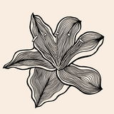 Beautiful flower, Hand drawn Stock Image
