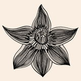 Beautiful flower, Hand drawn Royalty Free Stock Photography