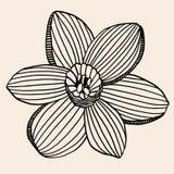 Beautiful flower, Hand drawn Royalty Free Stock Photo