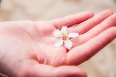 Beautiful flower in hand stock photo