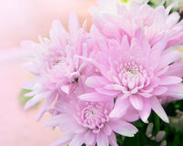 Beautiful flower with high key technic photography royalty free stock image