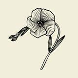 Beautiful flower isolated Stock Photo