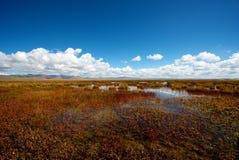 Beautiful Flower Lake Royalty Free Stock Image