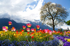 Beautiful flower landscape. At summer day Royalty Free Stock Image