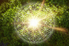 Beautiful flower of life in nature Stock Photo