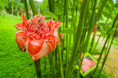 Beautiful flower located in a garden in Mindo, Ecuador Stock Images