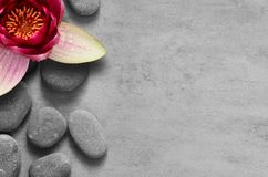 Flower lotus and stone zen spa on grey background. Beautiful flower lotus and stone zen spa on grey background royalty free stock photos