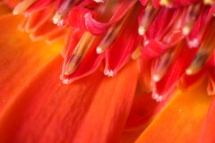 Beautiful flower - macro mode Royalty Free Stock Images