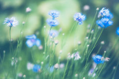 Beautiful flower made with soft filter Stock Image