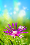 Beautiful flower in magic garden Stock Images