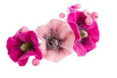 Beautiful flower Malva souvenir made of wool Stock Image