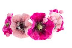 Beautiful flower Malva souvenir made of wool Stock Photos