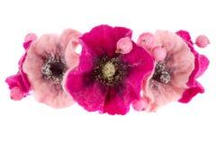 A beautiful flower Malva souvenir made of woolv Royalty Free Stock Photo