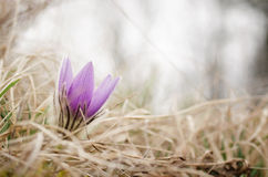 Beautiful flower on the meadow Royalty Free Stock Photo