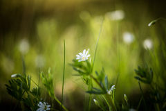 Beautiful flower on a natural background Royalty Free Stock Photo
