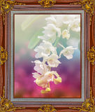 Beautiful flower orchid in  Antique look gold color picture fram. E Royalty Free Stock Photo