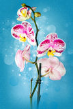 Beautiful flower Orchid Stock Images