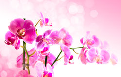 Beautiful flower Orchid Stock Photo