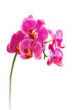 Beautiful flower Orchid Stock Image