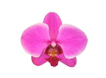Beautiful flower Orchid, pink phalaenopsis close-up isolated Royalty Free Stock Photography