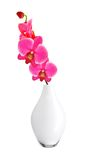 Beautiful flower Orchid, pink phalaenopsis in vase isolated Stock Photos
