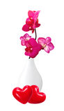 Beautiful flower Orchid, pink phalaenopsis in vase isolated Royalty Free Stock Image