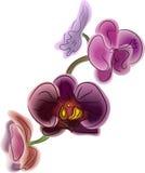 Beautiful flower orchidea. Handmade vector illustration, beautiful flower orchidea, aquarel style Royalty Free Stock Photography