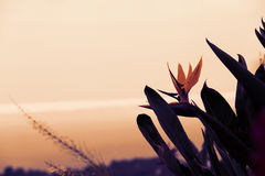 Beautiful flower over the sunset. Background Stock Images