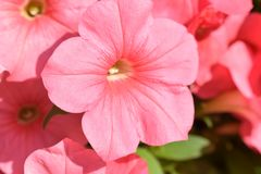 Beautiful pink flower in the park like wallpaper stock photo