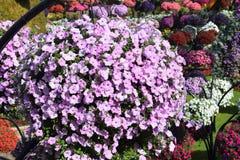 Beautiful flower in the park Dubai miracle garden stock photo
