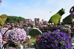 Beautiful flower in the park Dubai miracle garden stock photography