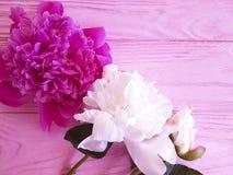 Beautiful flower summer peony romantic on pink wooden background. frame. Beautiful flower peony on pink wooden background frame romantic summer stock photography