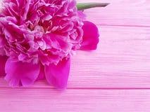 Beautiful flower peony birthday romantic on pink wooden background. frame. Beautiful flower peony on pink wooden background romantic summer birthday stock images