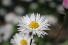 A beautiful flower. This photo was taken in Bulgaria stock image